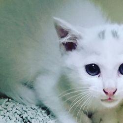 三重県津市 7月2日(日)子猫の譲渡会