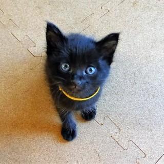 黒猫❤【バニラ】MIX.2017.5月中旬頃生♂