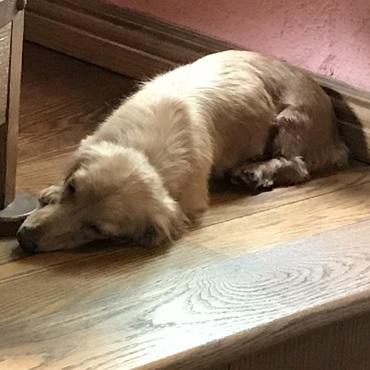クタリと寝てる。