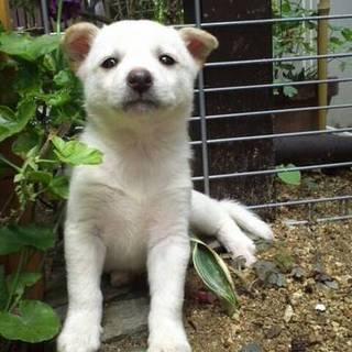生後1ヶ月!可愛い子犬ちゃん♬