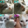 2カ月のかわいい子猫 サムネイル2