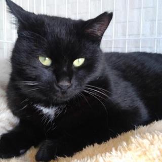 幸運のエンジェルマーク付き黒猫