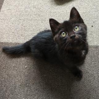 黒猫の男の子★元気で人懐っこいです!