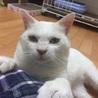人馴れ抜群の白猫くん