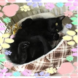 甘えん坊でユニークな歩き方の黒猫、テツ君(^^)/