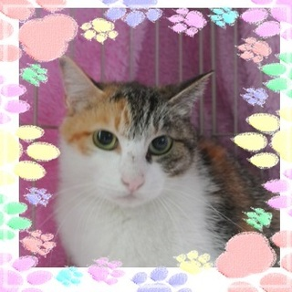 大きな瞳が可愛いミケ猫タマちゃん(=^・^=)