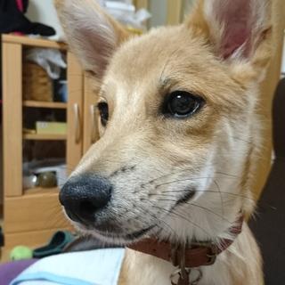中型犬の子犬です♪