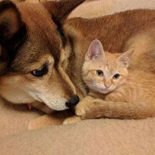 人も猫も犬も大好き甘えん坊のマロン