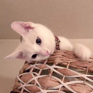 猫が大好き白猫ソルトくん