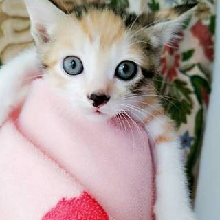 生後2-3カ月 品川育ちの子猫たち