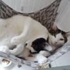 子猫の時から懐かない男の子 サムネイル2
