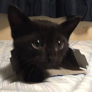 お茶っぱ兄妹‼︎ふかふかの黒猫ウーロン