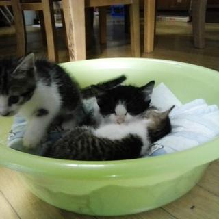 子猫ちゃんを育ててくださいませんか。