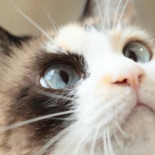 初めての猫にビヨンセを。熟年層にもおすすめです!