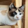 初めての猫にビヨンセを。熟年層にもおすすめです! サムネイル5