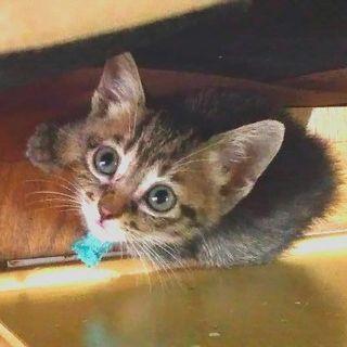 急募!民家の庭先で生まれた7匹の子猫