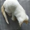 2カ月のかわいい子猫 サムネイル7