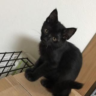 H29.4.5生まれ 黒ネコ『かなちゃん』