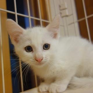 ビビリ~な美男子の白猫