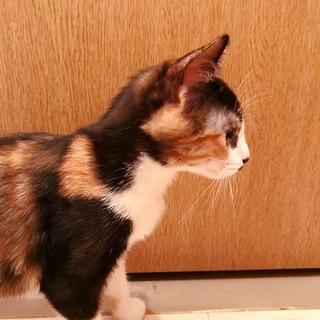 子猫 4ヶ月