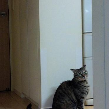 猫が3頭います!照明スイッチの上に、2頭いるのでした~。ニトリで衝動買い★
