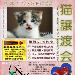 「譲渡会★オレンジチャンス」譲渡セミナー&子猫譲渡会