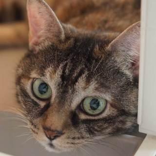 猫より人間大好き「チャコ」ちゃん