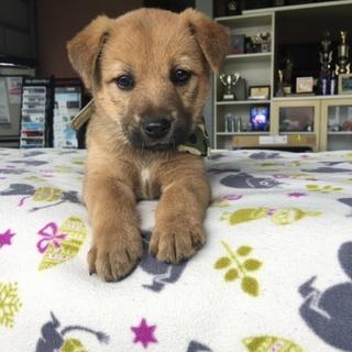 生後1ヶ月の子犬4匹 里親様募集