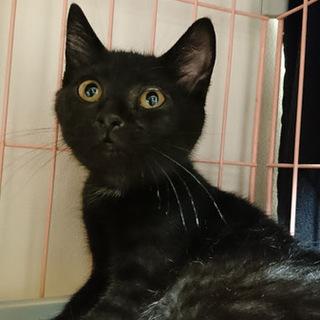すらっと美人の黒猫
