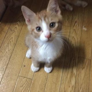 【山口県】野良猫の子ども兄弟