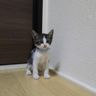 子猫かわいがってください!