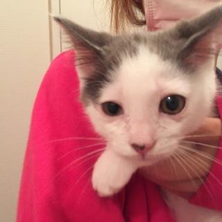 推定2-3ヶ月子猫ちゃん。男の子です。