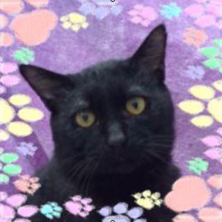 ワイルドで遊び好きな黒猫カイ君(=^・・^=)