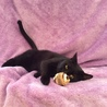 甘えん坊でユニークな歩き方の黒猫、テツ君(^^)/ サムネイル2