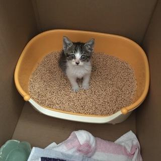 生後1ヶ月半ほどの可愛い猫ちゃんです!