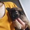 生後2ヶ月 小さめのMix子犬