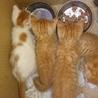 子猫4匹です❤
