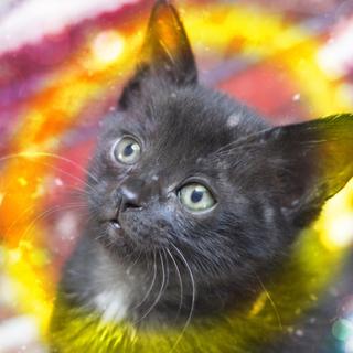 生後2ヶ月♡甘えん坊黒猫ひかり2匹以上限定