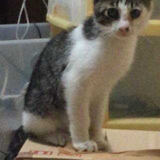 3ヶ月くらいのオスの仔猫ちゃん
