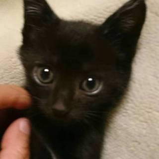 5月3日生まれ 黒猫(雄) くーたくん