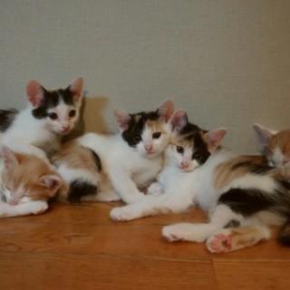可愛い子猫の里親募集してます。