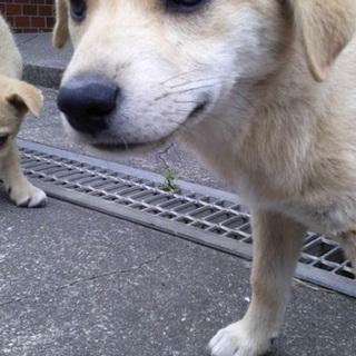 2ヶ月野犬3匹きょうだい(*^^*)
