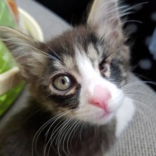 子猫の里親様募集します。人懐こい子です。