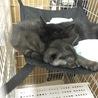 愛媛県松山市保健所から保護した仔猫8番9番/兄妹