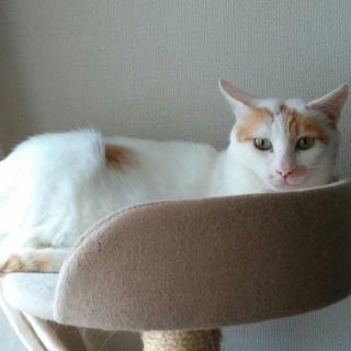 甘えんぼうの白猫くん☆