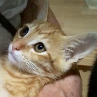 美形兄妹のレオンくん…3ヶ月