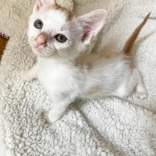 可愛いチビチビ子猫一ヶ月半茶白姉弟
