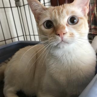 青い目のボブティル女子 カンナちゃん