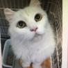 可愛いシニア猫 4匹収容されてます!
