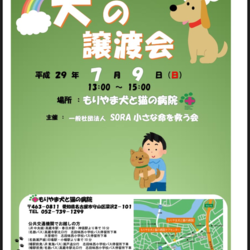 7月9日日曜日 譲渡会 名古屋市守山区にて